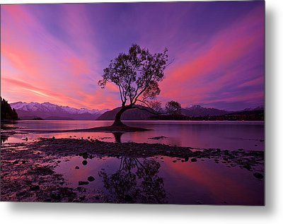 Wanaka Tree Metal Print