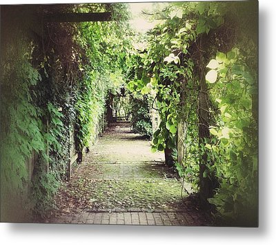 Metal Print featuring the photograph Wandering by Karen Stahlros