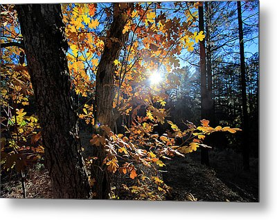 Metal Print featuring the photograph Waning Autumn by Gary Kaylor