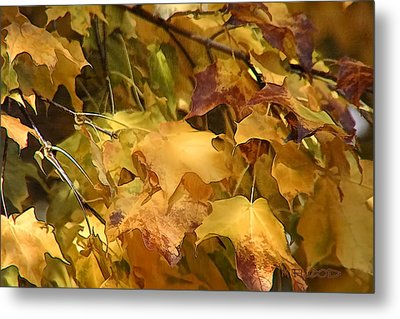 Metal Print featuring the photograph Warm Fall Leaves by Michael Flood