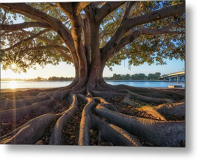 Warmed By The Sun Metal Print by Joseph S Giacalone