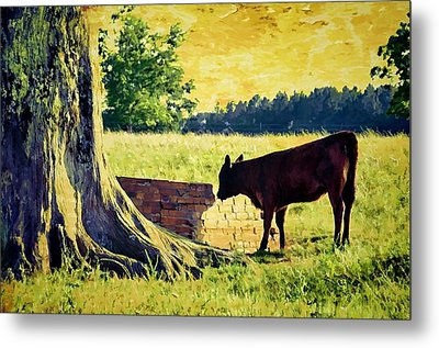 Warming Up In The Morning Glow Metal Print by Jan Amiss Photography