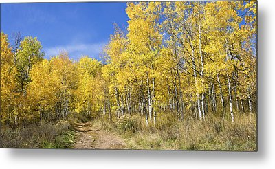 Wasatch Fall Metal Print by Chad Dutson