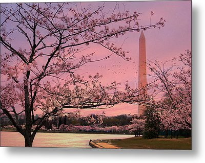 Metal Print featuring the photograph Washington Monument Cherry Blossom Festival by Shelley Neff