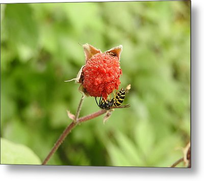 Wasp And Berry Metal Print
