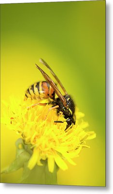 Wasp Metal Print by Jouko Mikkola
