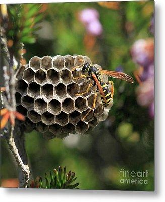 Wasp Metal Print by Stephan Grixti