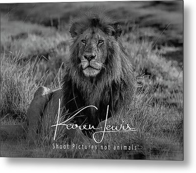 Metal Print featuring the photograph Watching And Waiting by Karen Lewis