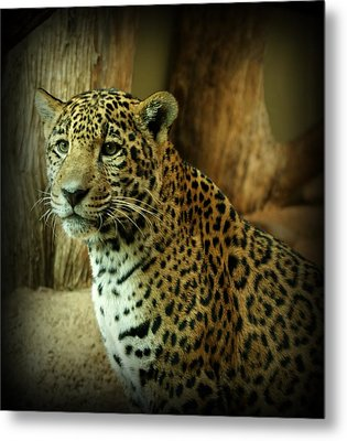 Watching Metal Print by Sandy Keeton