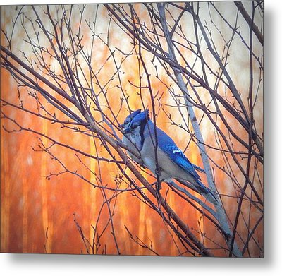 Watching The Sun Rise Metal Print by Karen Cook