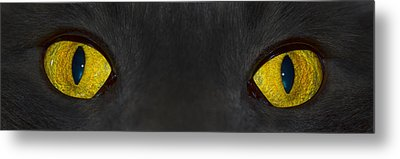 Watching You Metal Print by Shane Bechler