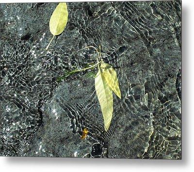 Water And Leaves Metal Print