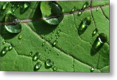 Water And Light Metal Print by Marilynne Bull