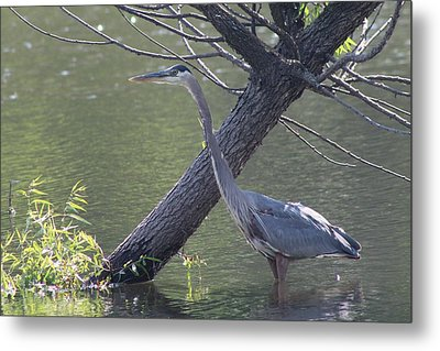 Water Bird And River Tree Metal Print