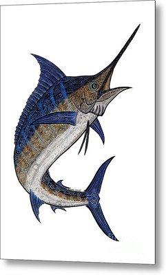 Water Color Tribal Marlin IIi Metal Print