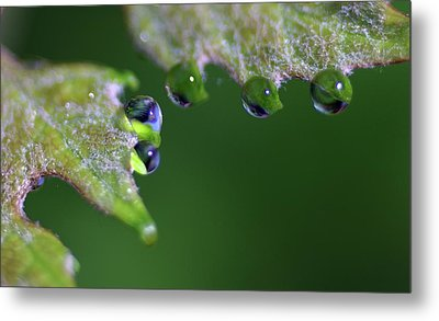 Metal Print featuring the photograph Water Droplet IIi by Richard Rizzo