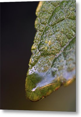 Water Droplet V Metal Print by Richard Rizzo