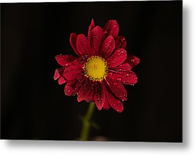 Metal Print featuring the photograph Water Drops On A Flower by Jeff Swan