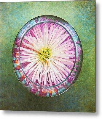 Water Flower Metal Print by Scott Norris