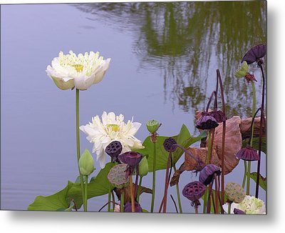 Water Flowers Metal Print by Jim Justinick