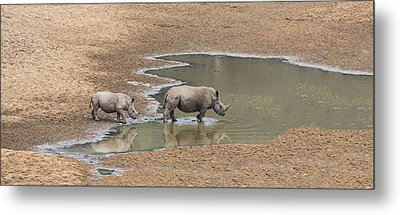 Water For Rhinos Metal Print by Stephen Stookey