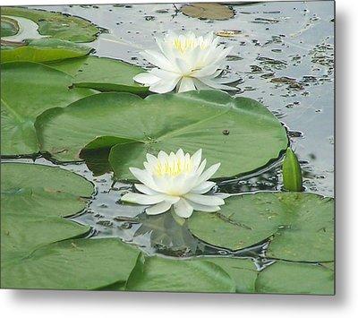 Water Lilies At Conesus Lake Metal Print