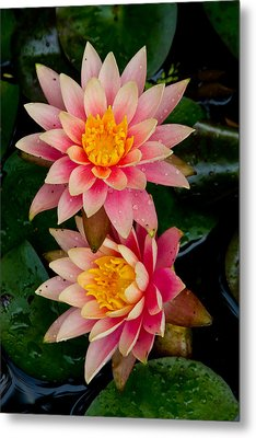 Metal Print featuring the photograph Water Lilies by Brent L Ander