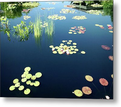 Metal Print featuring the photograph Water Lilies by Marilyn Hunt