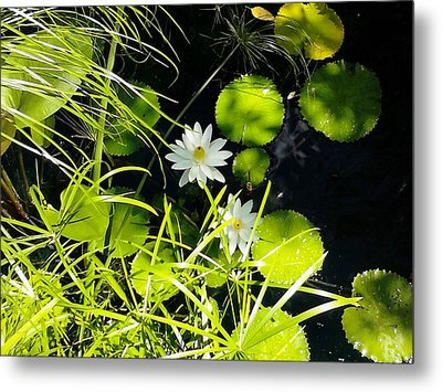 Water Lillies Metal Print by John Parry