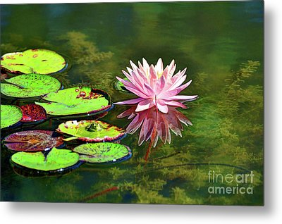Water Lily And Frog Metal Print
