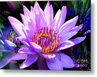 Water Lily In Purple Metal Print