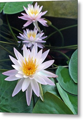 Water Lily Line Metal Print by Farol Tomson