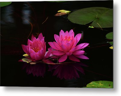 Water Lily Metal Print by Nancy Landry