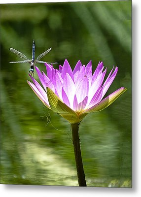 Metal Print featuring the photograph Water Lily With Dragon Fly by Bill Barber