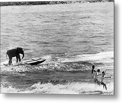 Water Skiing Elephant Metal Print by Underwood Archives