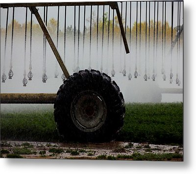 Water The Carrots Metal Print