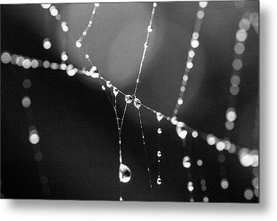 Metal Print featuring the photograph Water Web by Darcy Michaelchuk