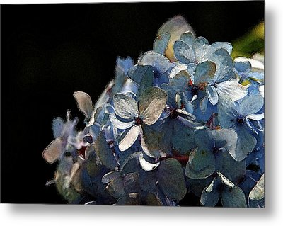 Watercolor Blue Hydrangea Blossoms 1203 W_2 Metal Print