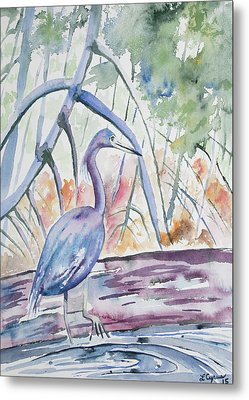 Watercolor - Little Blue Heron In Mangrove Forest Metal Print by Cascade Colors