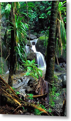 Waterfall El Yunque National Forest Mirror Image Metal Print by Thomas R Fletcher