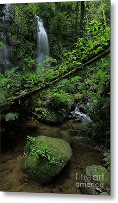 Waterfall Inside The Rainforest Costa Rica Metal Print by Juan Carlos Vindas