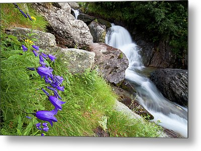 Waterfalls And Bluebells Metal Print by Mircea Costina Photography