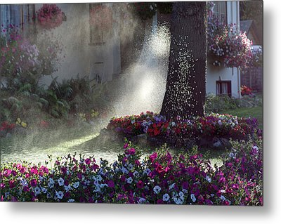 Watering The Lawn Metal Print by Keith Boone