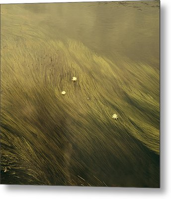 Waterlilies Metal Print