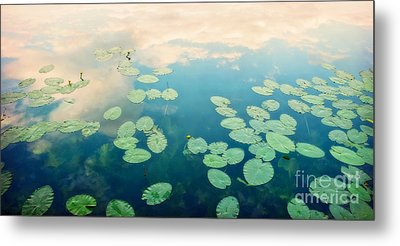Waterlilies Home Metal Print by Priska Wettstein