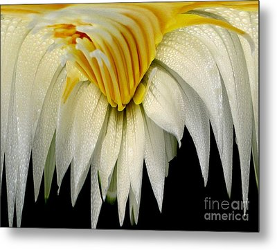 Waterlily Flower Abstract Metal Print by Rose Santuci-Sofranko
