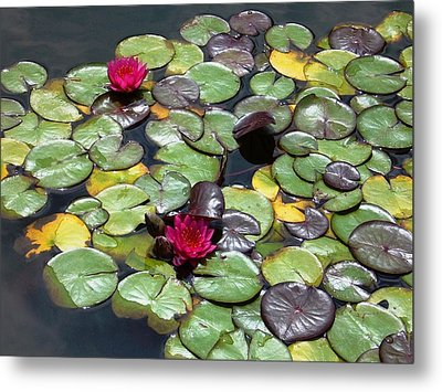 Waterlily Metal Print by Gonca Yengin