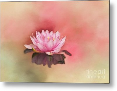 Waterlily Metal Print by Kathleen Rinker