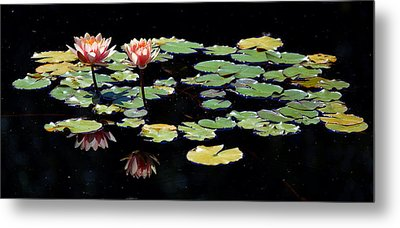 Metal Print featuring the painting Waterlily Panorama by Marilyn Smith