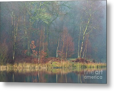 Waters Edge Yew Tree Tarn Metal Print by Tony Higginson